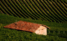 Langhe_IV_by_BohemienStyle