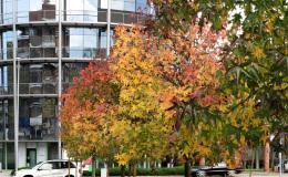 cosimo autunno