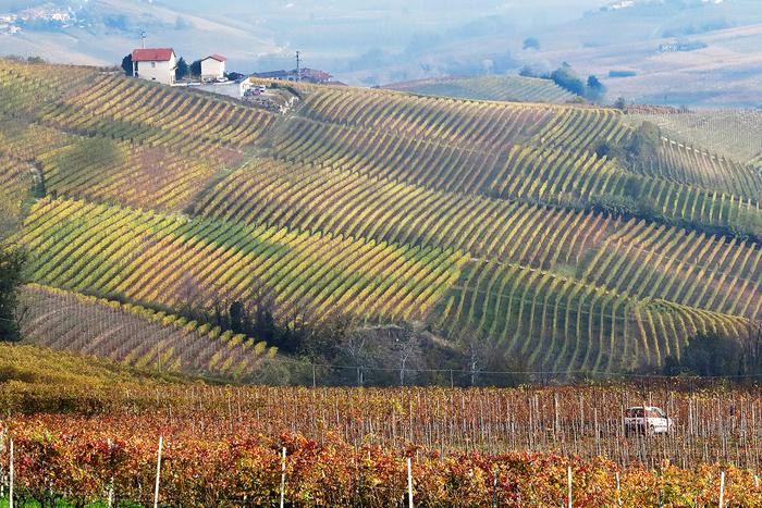 Cosimo colline